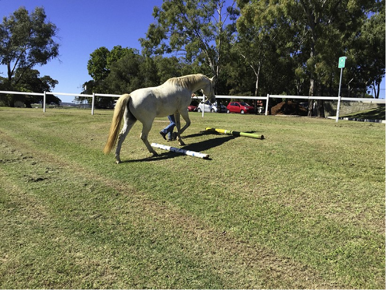 Physiotherapy Assessment for the Equine Athlete