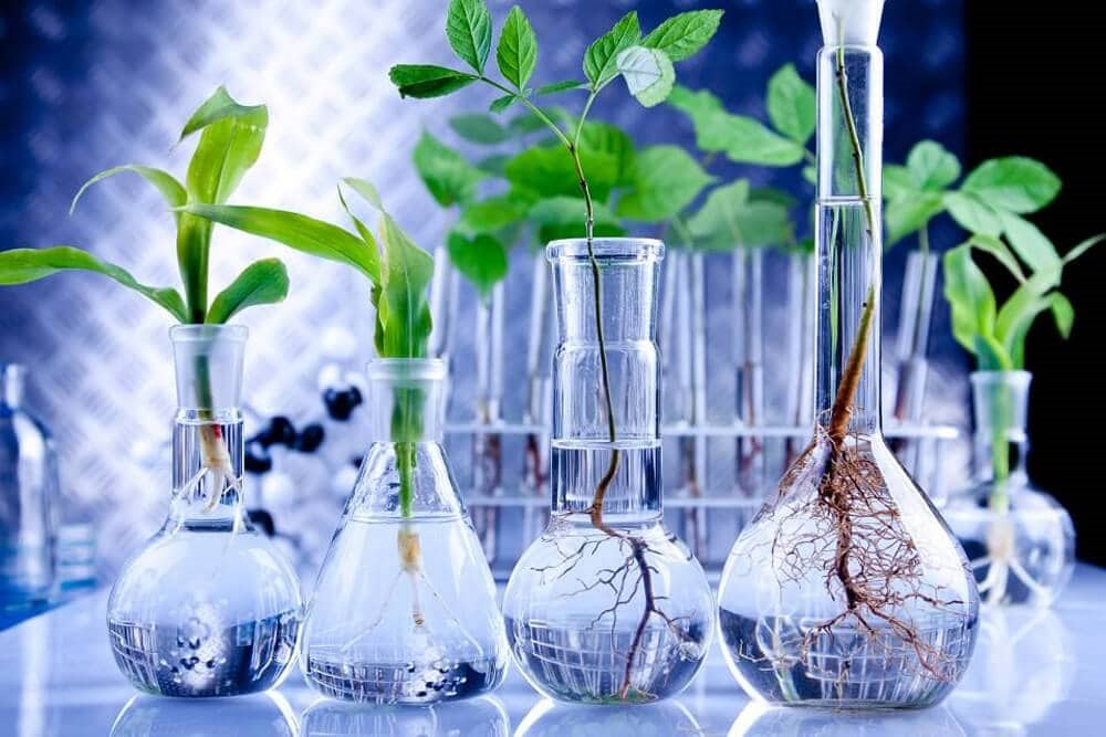 Βεταϊνη: Φυσική VS συνθετικων μορφών