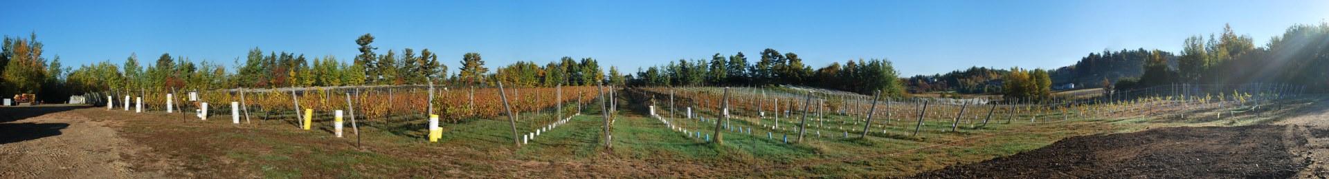 Domaine Latitude 46 Estate Winery