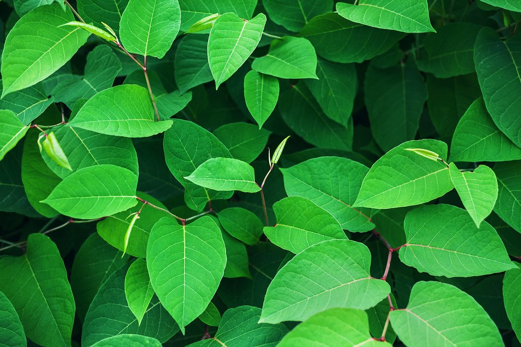 Big Green Leafs | Abstract composition of big green leafs ...