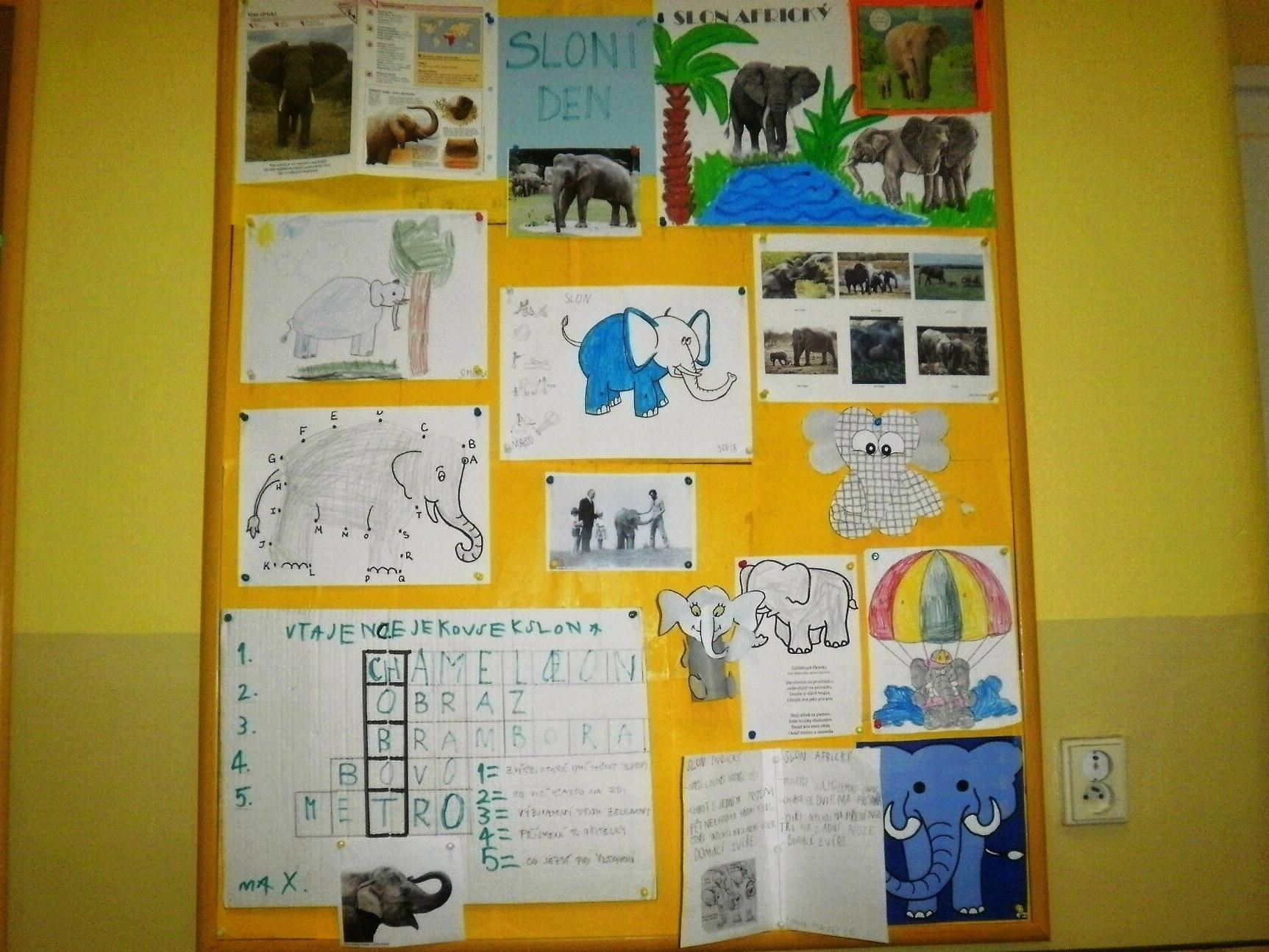 video o slonech
