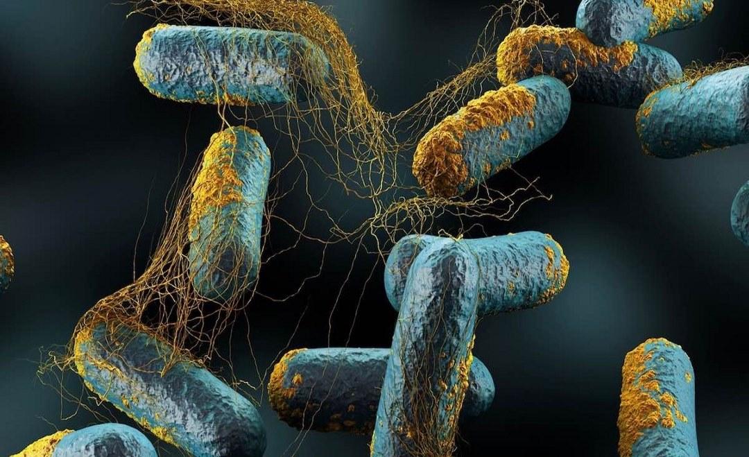 FRA Gut Balance: για την αποτελεσματική καταπολέμηση των βακτηρίων και την αύξηση των αποδόσεων στην πτηνοτροφία και τη χοιροτροφία
