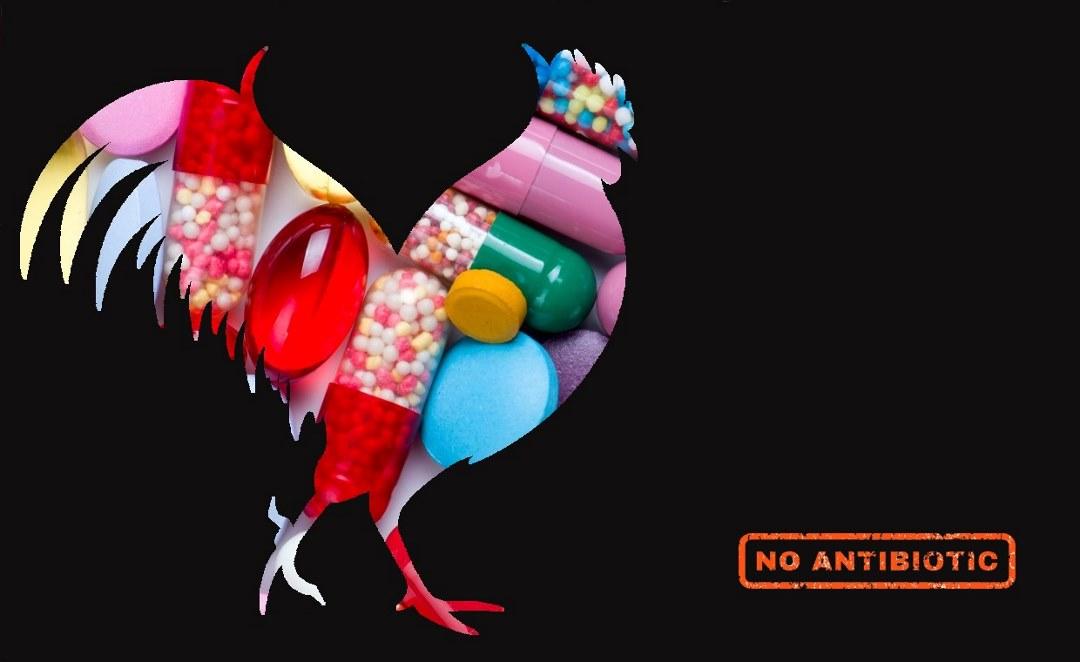α-μονογλυκερίδια: για τη μείωση της χρήσης των αντιβιοτικών στην πτηνοτροφία