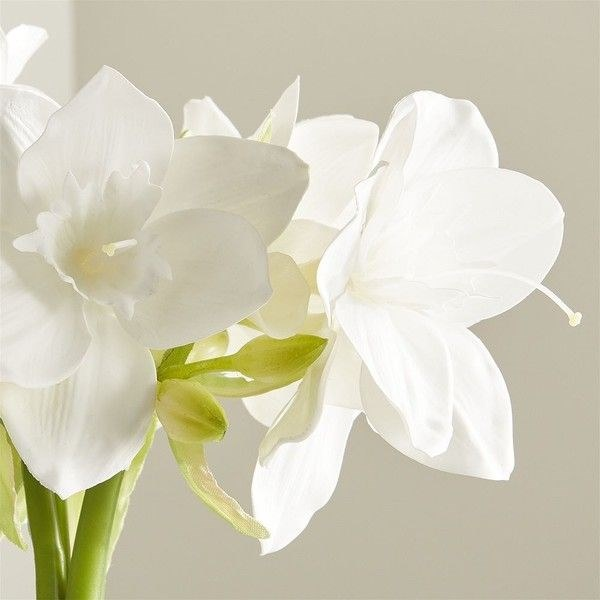 Crate & Barrel Amazon Lily Flowers (96 ILS) liked on Polyvore ...